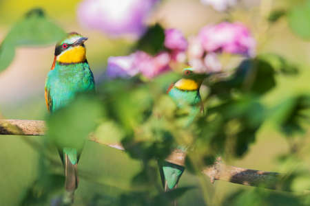 pair of colored birds sit among the flowers, wild nature