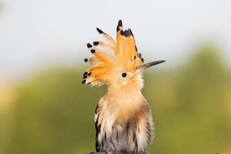 funny hairstyle bird looks up funny
