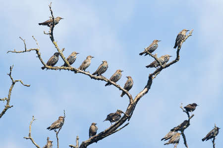 flock of birds sitting on a dry branch