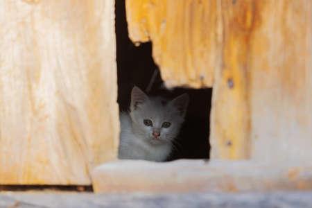 kitten looks at the world through a crack in the door Standard-Bild