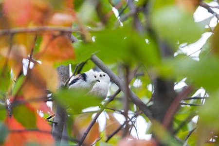 couple of cute birds among the autumn foliage