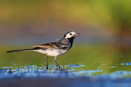beautiful wild bird by the lake catches insects