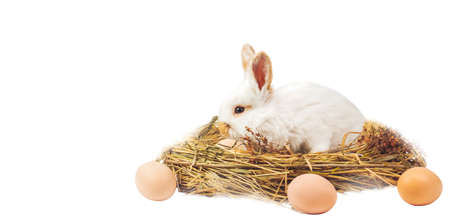 easter bunny sitting in a nest with eggs