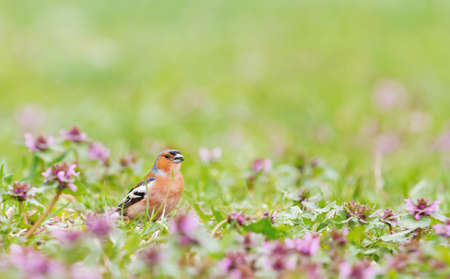 beautiful bird sings a song among spring flowers