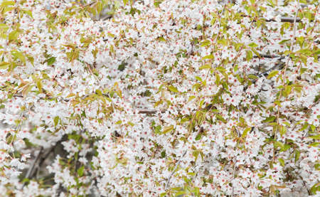 background of beautiful spring flowers