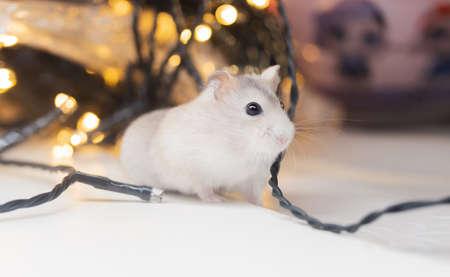 hamster among glowing holiday garlands