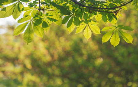 spring background of beautiful leaves and bokeh