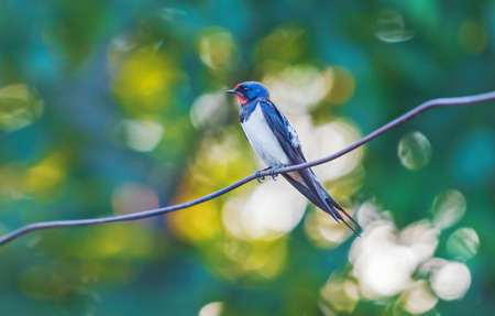 beautiful bird sitting on a wire