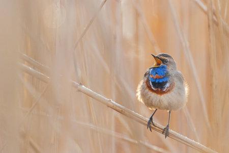 beautiful bird sings on a frosty morning