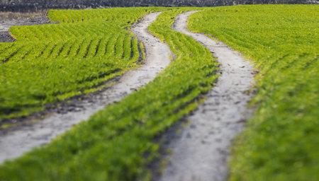 spring green road on dirt Reklamní fotografie