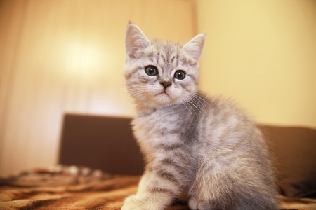 cute little kitten sitting on the couch waiting for the owner