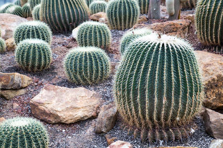 Various types of Cactus in the glass house