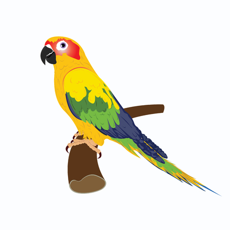 blue eyes: parrot isolated on white background , vector illustration design Illustration