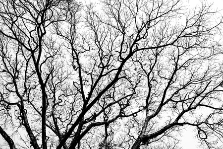 Leafless branches isolated on white background photo