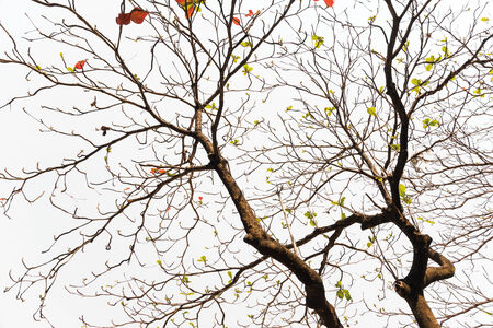 withered tree without leaves