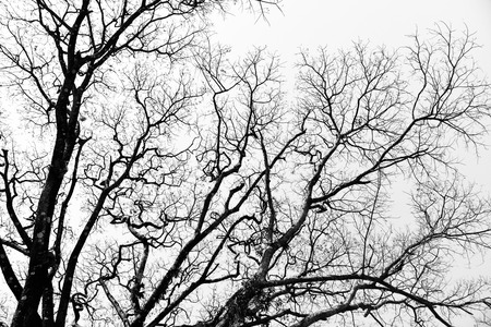 Leafless branches isolated on white