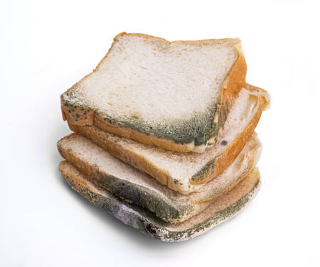 bread mold: Slices of bread covered with mold on white background.
