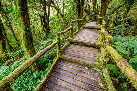 Beautiful rain forest at ang ka nature trail in doi inthanon nation park, Chiang Mai, Thailand. photo