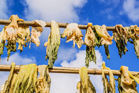 dehydrated: Dried vegetables against a blue sky Stock Photo