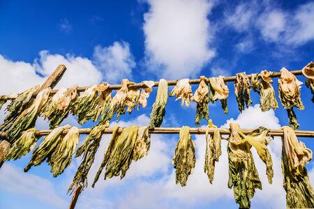 Hortalizas secas contra un cielo azul