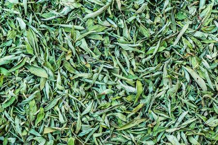substitute: Dried Stevia Rebaudiana Bertoni - Natural sweetener leaf sugar substitute.