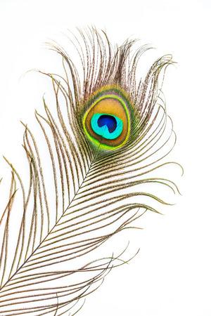 Pauw veren op een witte achtergrond