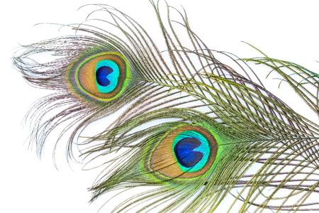 plumas de pavo real: Plumas del pavo real en el fondo blanco