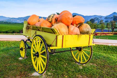 carreta madera: Carro de madera amarilla y calabazas en el jard�n.