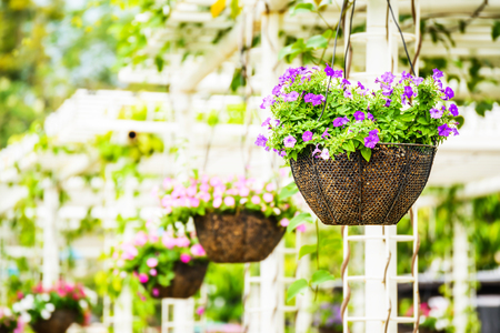 Hanging basket of flowers Stok Fotoğraf