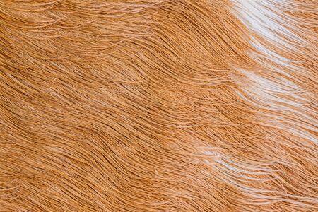 cow hide: Cow fur (skin) texture.