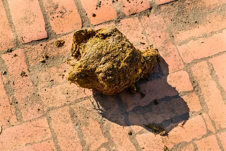 faeces: Feces of elephant drop on ground