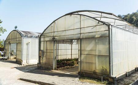 nurseries: Greenhouse nurseries, sirikit greenhouse, chiang mai, Thailand Editorial