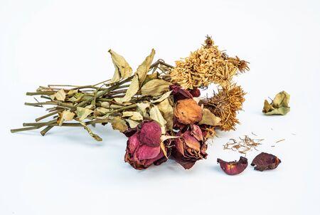 말린 장미와 국화 꽃 흰색 배경에 고립 된