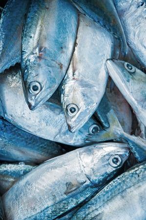 Verse rauwe makreel vissen in de markt. Stockfoto