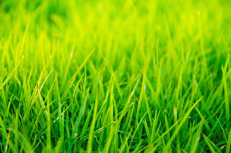 close up image: Macro close up of green grass with focus point.