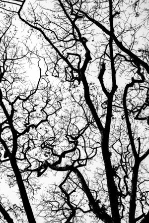 arbre mort: Arbre mort sans feuilles fond. Banque d'images