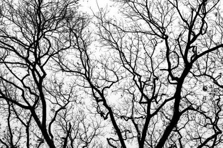 tree dead: Albero morto senza foglie sfondo. Archivio Fotografico