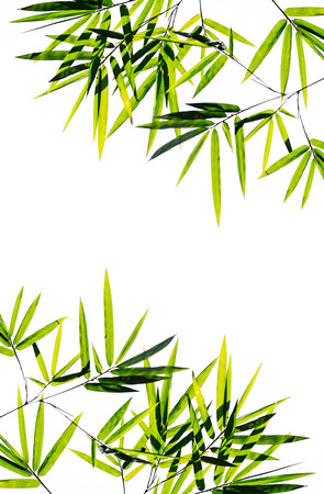 bamboo leaves on white
