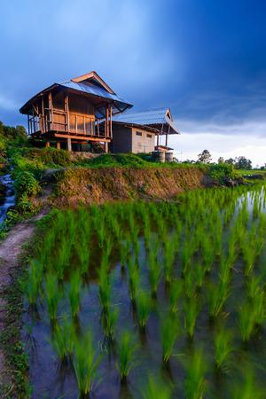 bong: Terrace rice fields at Bann Bong Piang in Mae chaem, Chaing Mai, Thailand ( long light exposure shot)