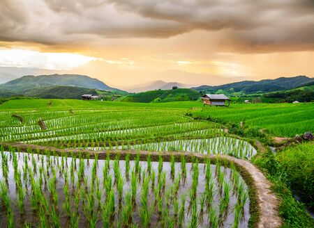 bong: Terrace rice fields at Bann Bong Piang in Mae chaem, Chaing Mai, Thailand