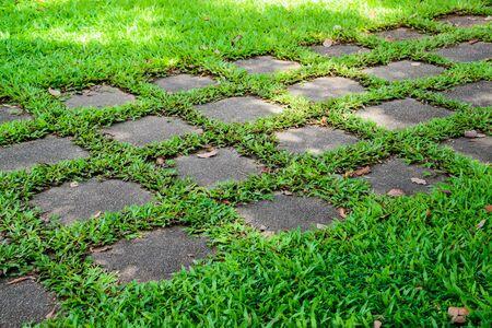 garden lawn: Beautiful green garden