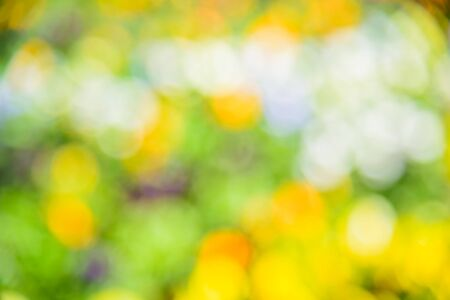 Abstract blurred out of focus from flower garden background Stock Photo
