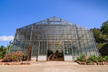 invernadero, las plantas jóvenes que crecen en una casa muy grande vivero de plantas en la granja. Foto de archivo