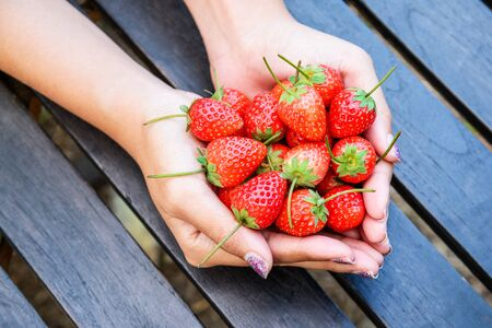 picking fingers: Fresh strawberries in female hands isolated on wooden background.