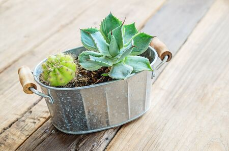 uncomplicated: Cactus decorated on the table wood in restaurant