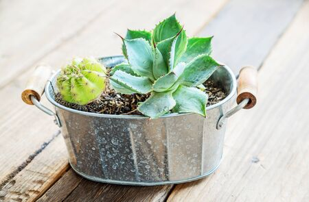 decotated: Cactus decorated on the table wood in restaurant