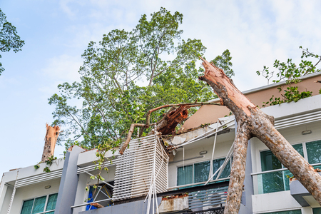 Damage building by falling trees after hard rain storm in Sarapee of Chiang Mai, Thailand. 版權商用圖片 - 57191214