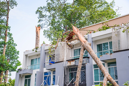 Damage building by falling big trees after hard rain storm in Sarapee of Chiang Mai, Thailand.