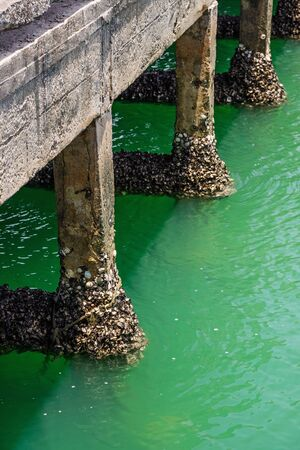 pristine corals: Cement pole of the fishing bridge with barnacle seashell