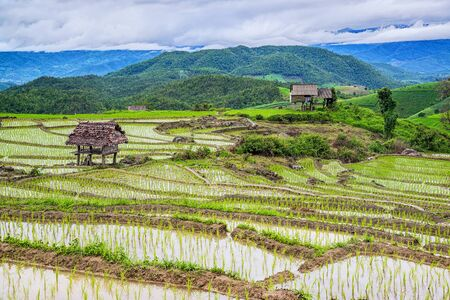 Terraced Paddy Field of Pa Bong Pieng in Mae chaem Village , Chaingmai Province , Thailand.